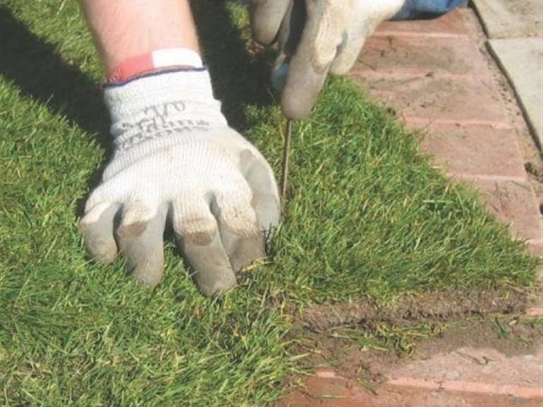 Lawn Installers for Nuneaton